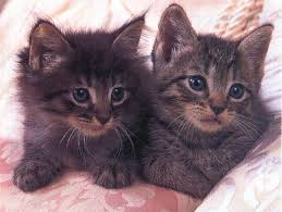 real kittens
