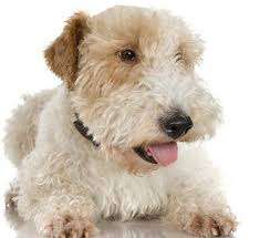 kinds of terrier dogs