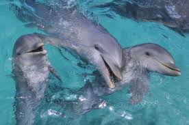 babies dolphins