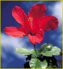 endangered plant