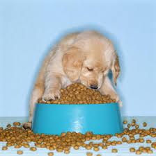 puppies food