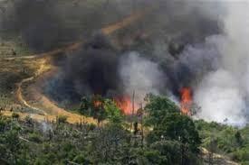 destruction of rainforests