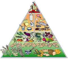 food pyramid for adolescents