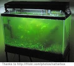 green algae aquarium