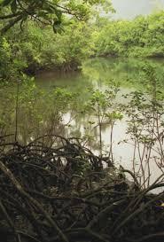 australia rainforests