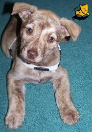 cross bred puppies