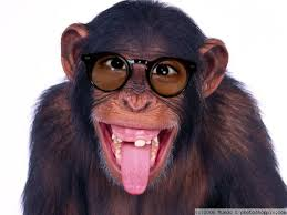funny chimpanzee pictures