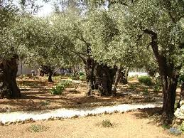 garden of gethsemane israel