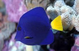 peces de agua salada