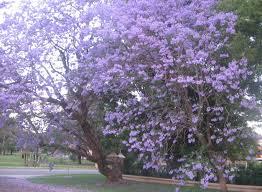 flowers tree