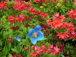 flor azalea