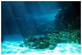picture of ocean floor