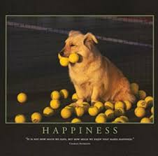 dogs tennis ball