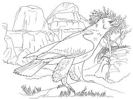 real animal coloring pages