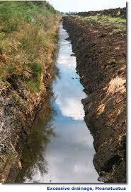 peat soils