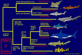 all the types of sharks