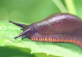 slug pictures
