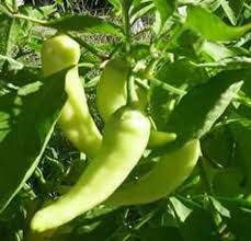 banana peppers pictures
