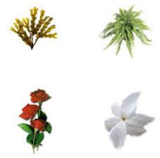 diferentes clases de flores