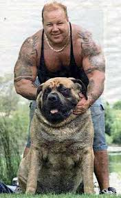 largest breed of dogs