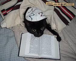 jewish cat