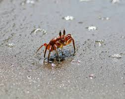 pictures of crabs