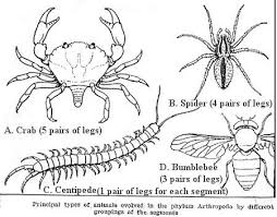 pictures of arthropods
