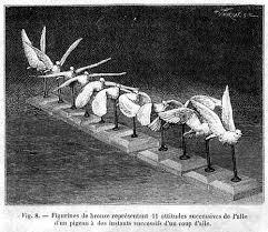 bird in flight sculpture
