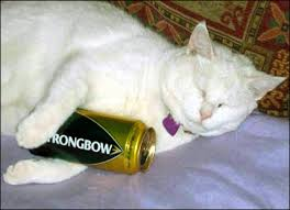 over weight cat