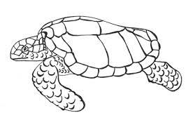 sea animal drawings