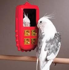 bird cell phones
