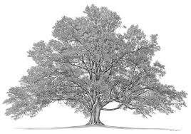 family photo tree