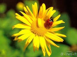 ladybug themes