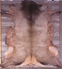 elk fur