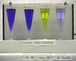 crystal violet assay