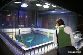 california academy of sciences aquarium