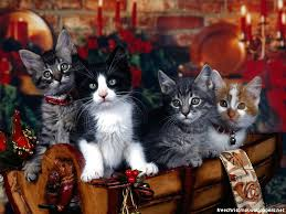 pictures of cats at christmas