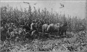corn binder