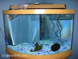 biofilter aquarium