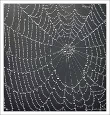 picture of spider web