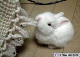 cute rabbit pics