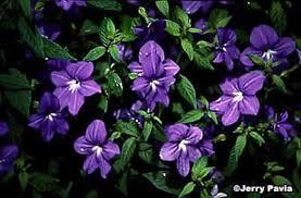 annual flowers photos