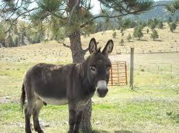 donkey animals