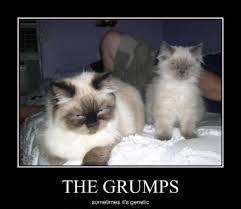 grumpy animal