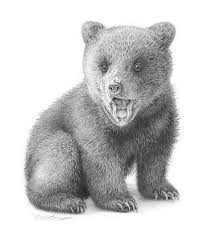how to draw a bear cub