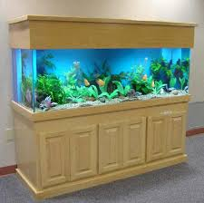 100 gallon terrarium