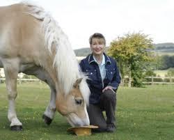 pets horse