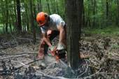 logger safety