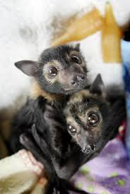 pictures of baby bats