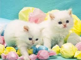 kittens screensavers